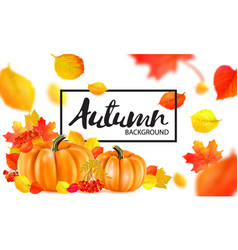 Background of orange autumn pumpkins vector