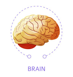 brain internal organ isolated icon nervious system vector image