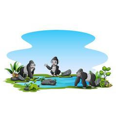 gorillas around small pond vector image