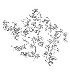 Black doodle ivy leaves vector image vector image