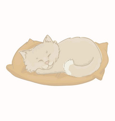 gray kitten sleeping on a pillow vector image