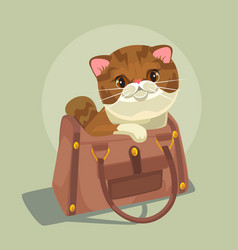 small cat character sitting lady bag vector image vector image