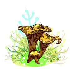 Girolle mushroom vector