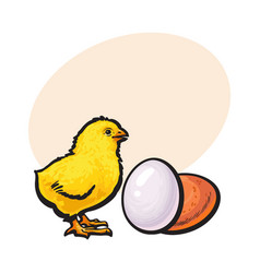 little newborn chicken and whole brown egg sketch vector image