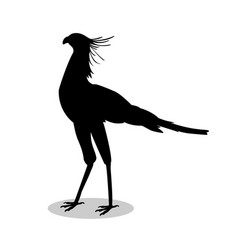 Secretary bird black silhouette animal vector