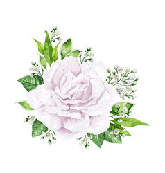 white rose flower in watercolor style isolated on vector image