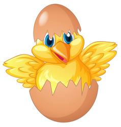 little chick hatching egg vector image vector image