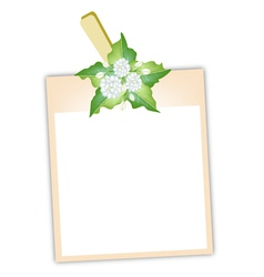 Blank Photos with Jasmine Flowers vector