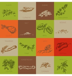 Hand drawn natural spices vector