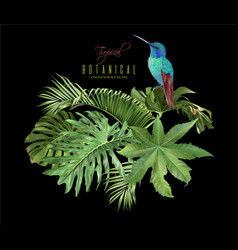 Hummingbird tropic arrangement vector