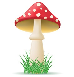 Mushroom amanita vector