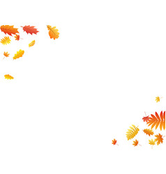oak maple wild ash rowan leaves vector image