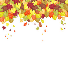 autumn leaf in colors vector image