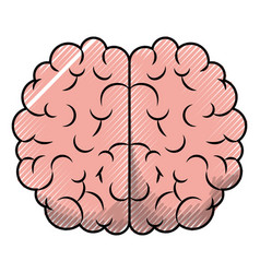 brain top view in colored crayon silhouette with vector image