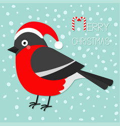 bullfinch winter red feather bird santa hat merry vector image