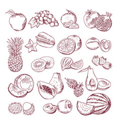 Fresh and juicy fruits hand drawn vector