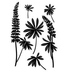 linden leaves pictograph set vector image