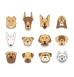 Popular breeds of dogs 12 linear colorful icons vector image