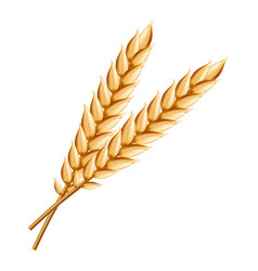 Wheat icon realistic style vector