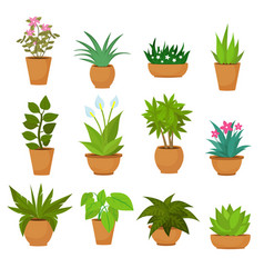 indoor and outdoor landscape garden potted plants vector image