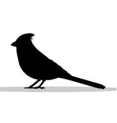 Cardinal bird black silhouette animal vector