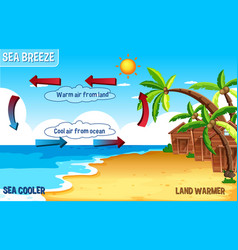 Diagram sea breeze with land and water vector