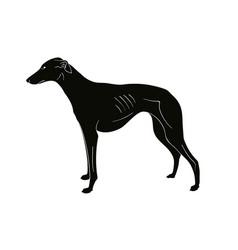 Hound breeds dog vector