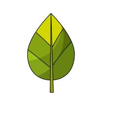 Natural leaf botany tropical plant vector