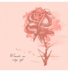 watercolor rose vector image