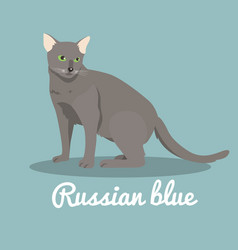 russian blue cat on sky blue background vector image vector image