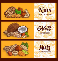 nuts and cereals banner sketch cashew and almonds vector image