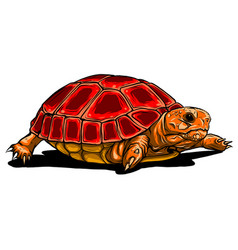 Turtle icon cartoon turtle vector