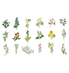 Wild flowers hand drawn set of detailed vector