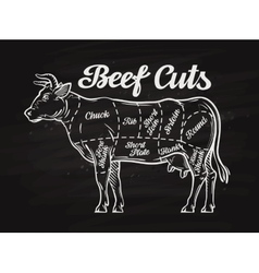 beef cuts template menu design for restaurant or vector image