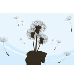 bouquet of dandelions vector image