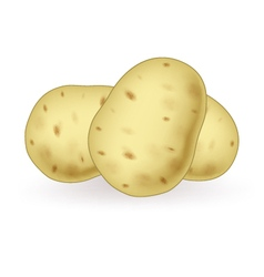 Cartoon potato vector image