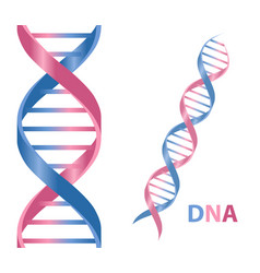 Dna cartoon icon vector