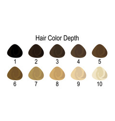Hair colour numbering system vector