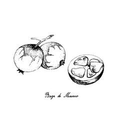 Hand drawn baga de macaco fruits on white backg vector