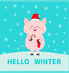 merry christmas pig holding candy cane sock red vector image