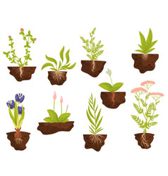 Set plants with roots in ground vector