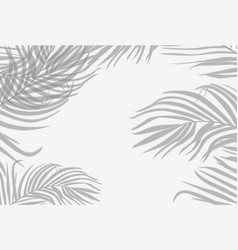 shadows palm leaf on white wall background summer vector image