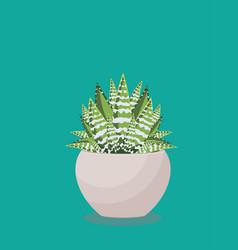 Succulent in a pot vector