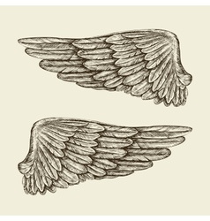 Hand drawn vintage wings Sketch vector image