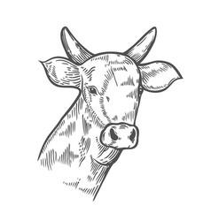 hand drawn cows head vector image