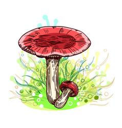 Russula mushroom vector