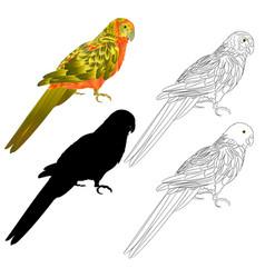 Tropical bird parrot sun conure natural outline vector