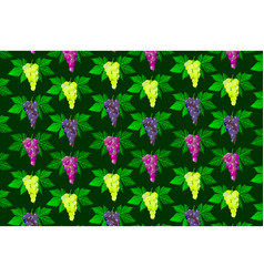 vine grape pattern vector image