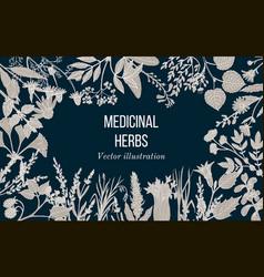 Vintage collection of hand drawn medicinal herbs vector