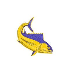Albacore Tuna Fish Drawing vector image
